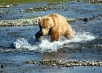175px-Bear_Alaska_(2).jpg